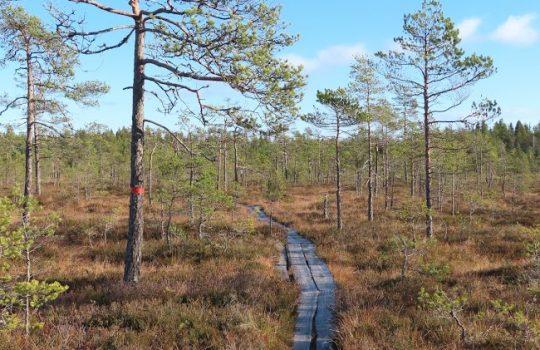 Varsinais-Suomen retkeilykohteet ja -reitit kootaan mobiilisovellukseksi